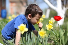 Smelling boy a  flowers Royalty Free Stock Photography