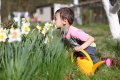 Smelling boy a  flowers Stock Images