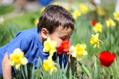 Smelling boy a  flowers Royalty Free Stock Photos