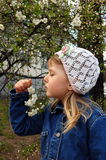 Smelling a cherry. Little girl smelling a flower spring cherry Royalty Free Stock Photos