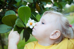 Smelling flower Royalty Free Stock Photography
