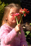 Smelling Flowers. A little gril smelling the gerber daisies she picked from her mother's garden Stock Photo