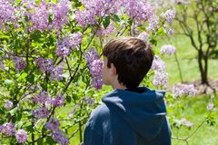 Smelling the flowers. Boy smelling purple spring lilacs with his back turned Royalty Free Stock Photos
