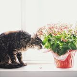 Smelling the flowers royalty free stock images