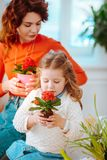 Cute appealing daughter smelling home flowers sitting near mom. Smelling flowers. Cute appealing daughter smelling home flowers sitting near red-haired mom stock photos