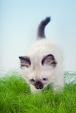 Smelling grass Royalty Free Stock Photos