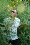 Smelling Marihuana. Growing at the roadside in India royalty free stock images