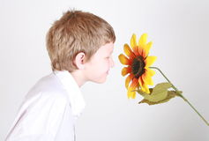 Smelling sunflower Royalty Free Stock Image