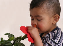 Smells soooo good. A small boy smells the flower with closed eyes Royalty Free Stock Photography