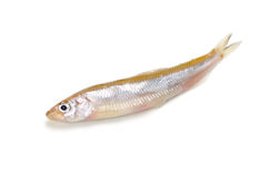Smelt. Cooking ingredient series    smelt. available for clipping work Royalty Free Stock Photo