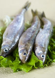 Smelt. Three smelt on plate and lettuce Stock Photos