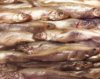 Smelt background. Smelt small fresh fish background closeup Royalty Free Stock Photo