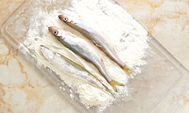 Smelt dusted in flour. Top view Royalty Free Stock Photography