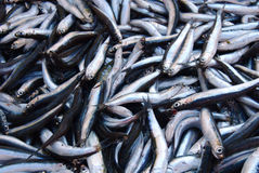 Smelt Fish Royalty Free Stock Photos