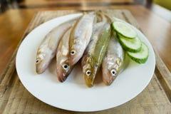 Smelt Fish (Osmerus eperlanus) Stock Image