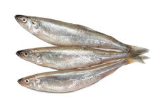 Smelt fishes Royalty Free Stock Photos