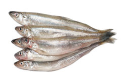 Smelt fishes. Isolated on white background Royalty Free Stock Photos