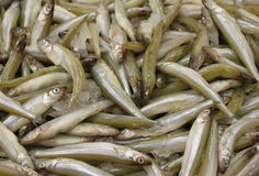 Smelt fresh fish. Smelt fresh little silver slender fish Royalty Free Stock Photo
