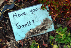 Smelt. Have you smelt, funny sign hand written Royalty Free Stock Image