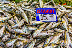 Smelt Istavrit sold on ice. At Grand Bazaar in Istanbul, Turkey Stock Image