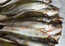 Smelten de vers gevangen vissen noordelijk (Osmerus-eperlanus) in een schotel uit Royalty-vrije Stock Foto