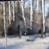 Smeltende ijskegels en dalingen van water De dag van de winter Stock Afbeelding