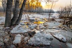 Smeltende sneeuw Stock Afbeeldingen