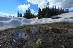 Smeltende sneeuw in de bergen royalty-vrije stock fotografie