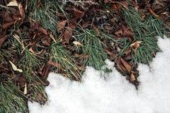 Smeltende sneeuw op groen gras dicht omhoog - tussen de winter Stock Afbeeldingen