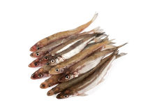 Smelts Stock Photo