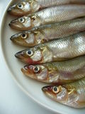 Smelts Stock Photography