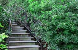 Smidesjärntrappuppgång i busken Royaltyfri Fotografi