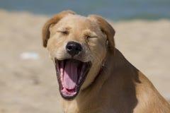 Smile! Royalty Free Stock Photo