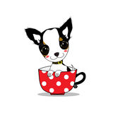 Smile chihuahua. Baby chihuahua with smiling face in red cup Royalty Free Stock Images