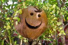 Smile coconut Stock Image