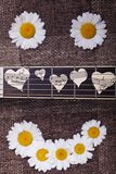 Smile of daisies and guitar Stock Photos