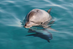 Smile dolphin. Little dolphin looking at camera Stock Photo