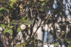 Smile icon miniature on tree. Twig Stock Photography