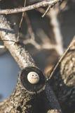 Smile icon miniature on tree Royalty Free Stock Photo