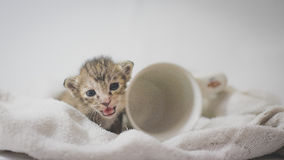 Smile Kitten Stock Image