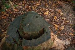 Smile in the Stump stock photos