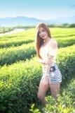 Smile Thai woman stand in tea plantation , Chiangrai Thailand Stock Image