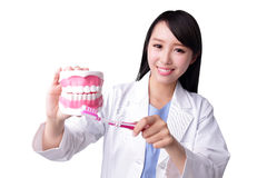 Smile woman dentist doctor. Teach you brush teeth. Isolated over white background. asian stock images