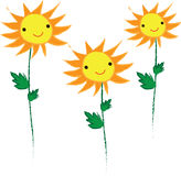 Smile yellow sunflower cute   background Royalty Free Stock Image