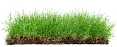 Smiley травы с солнцецветом стоковая фотография