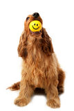 smiley προσώπου σκυλιών Στοκ φωτογραφίες με δικαίωμα ελεύθερης χρήσης