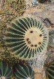 Smiley del cactus Fotos de archivo