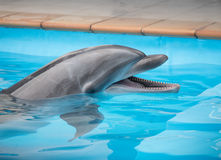 Smiley dolphin. Dolphin looks around, with attractive smile stock photo