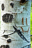 Smiley Face on Aspen Tree Stock Photos