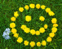 Smiley face in dandelions Royalty Free Stock Photography